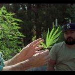 Organic cannabis farmer Wade Laughter describes his methods